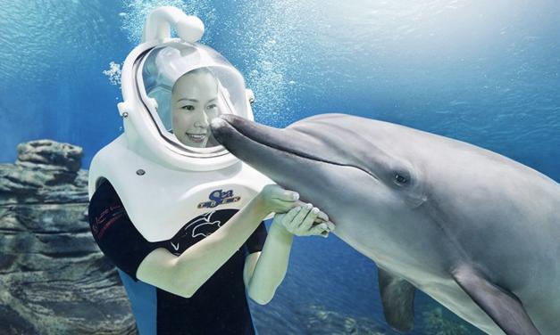 Dolphin Island Singapore of Sentosa Island