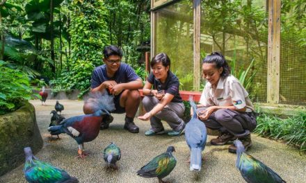 Jurong Bird Park: Where the Kings of the Sky Dwell