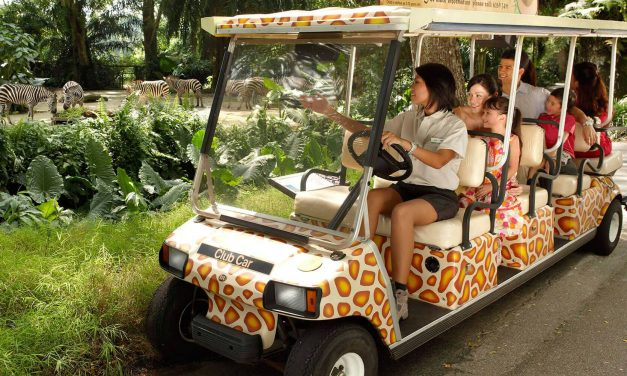 Get a Thrill Out of the Wildlife at Singapore Zoo!